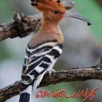Kondalaththi by Crea
