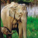 Yanaikal book by kovai sadhasivam