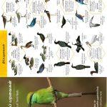 Tamil Bird watching guide