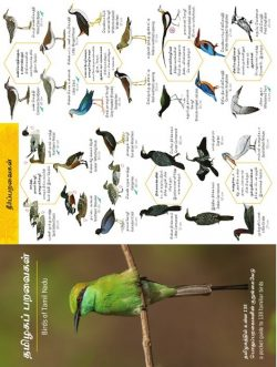 Early Bird Pocket guides
